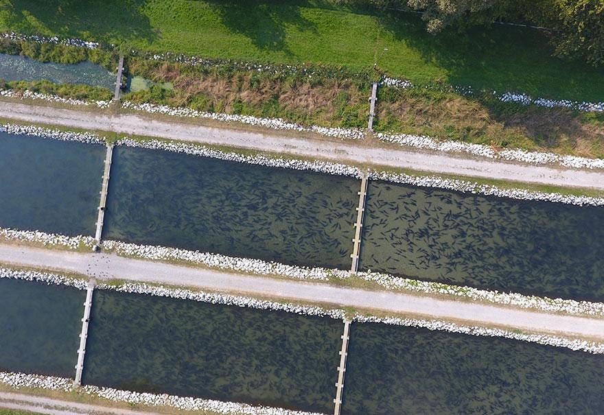 Allevamento Storioni in vasca
